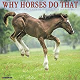 Why Horses Do That 2019 Wall Calendar