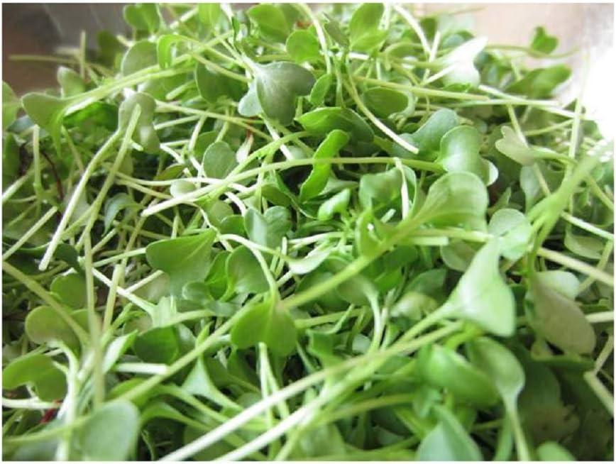 David's Garden Seeds Microgreens Mild Micro Mix 8723 (Green) Non-GMO, Open Pollinated One Ounce Pack