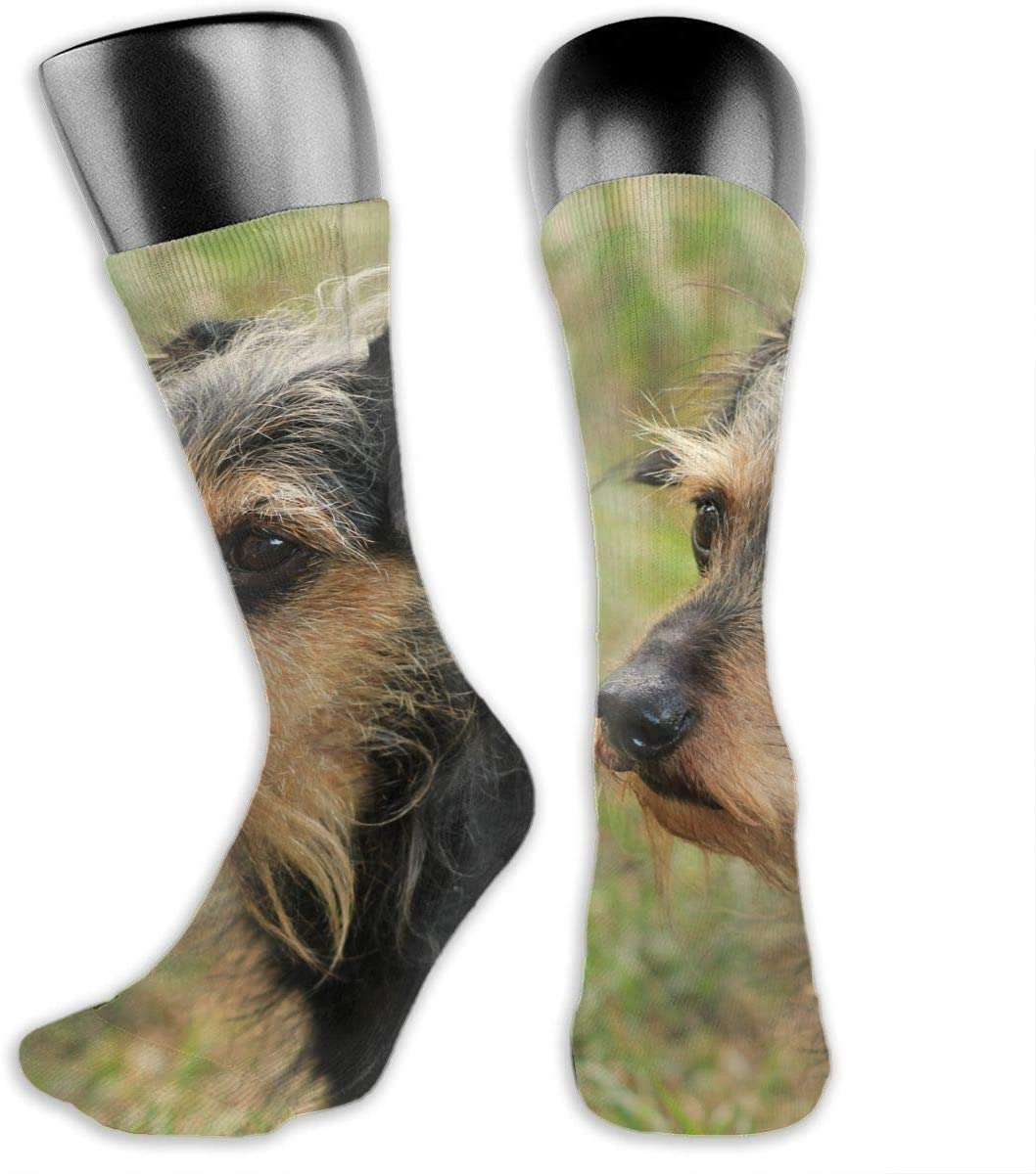 OLGCZM Dachshund Puppy Men Womens Thin High Ankle Casual Socks Fit Outdoor Hiking Trail