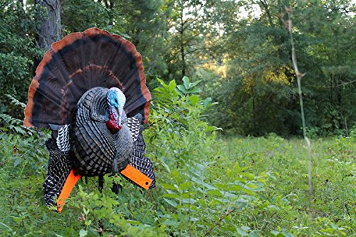 MOJO Outdoors Scoot & Shoot Turkey Hunting Decoy by MOJO Outdoors (Image #3)