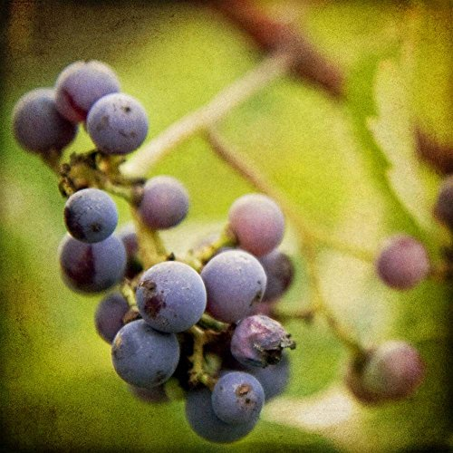 - Great Art Now Awaiting Harvest by Jessica Rogers Photography Art Print, 8 x 8 inches
