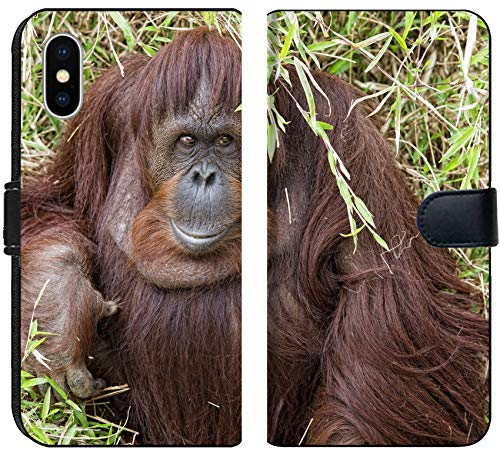 Luxlady Iphone X Flip Fabric Wallet Case Image Id  32011941 Orangutan Portrait While Looking At Yuo