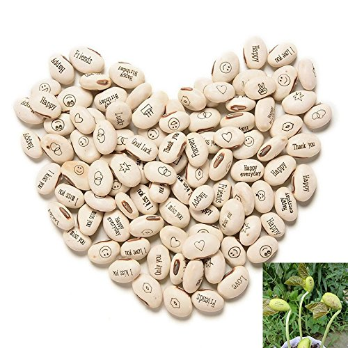 Funnytoday365 100Pcs Lot Mini Magic White Bean Seeds Gift Plant Growing Message Word Love Office Home
