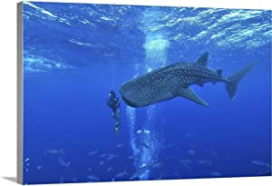 "GREATBIGCANVAS Whale Shark and Diver, Maldives Canvas Wall Art Print, 18""x12""x1.5"""