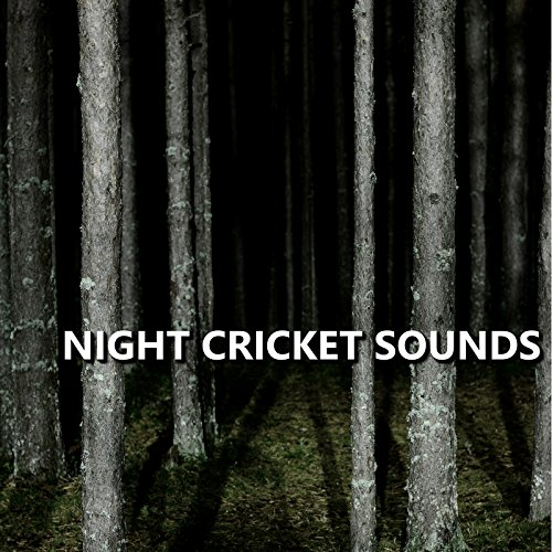 Quality Cricket Sounds - Quality Cricket