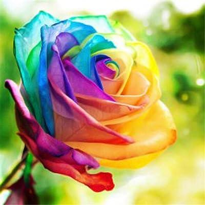 Lioder 20PCS Rare Colorful Rainbow Rose Seeds Indoor Petal Plants Exotic Flower Garden Decor Flowers : Garden & Outdoor