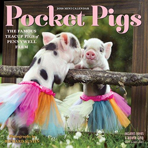 Pocket Pigs Mini Wall Calendar