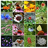 500 Butterfly Attracting Flower Mix Seeds with 25 Different Types of Flower by RDR Seeds