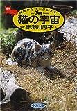 猫の宇宙―向島からブータンまで (中公文庫)