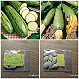 buy Courgette ''Greyzini F1'' HYBRID ~8 Top Quality Seeds - Very Productive - Early now, new 2018-2017 bestseller, review and Photo, best price $11.00