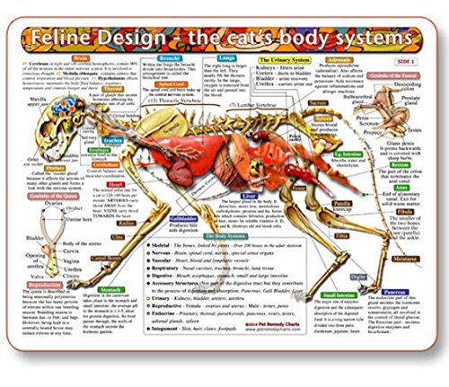 The Cat's Body Systems - A Double-Sided, UV Protected, Laminated Cat Anatomy Chart: A Learning and Teaching Chart For Veterinary Science Professionals, Veterninary Technicians, Cat Lovers and Breeders by Kemah