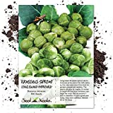 Seed Needs, Brussels Sprout Long Island Improved (Brassica oleracea) 500 Seeds Non-GMO