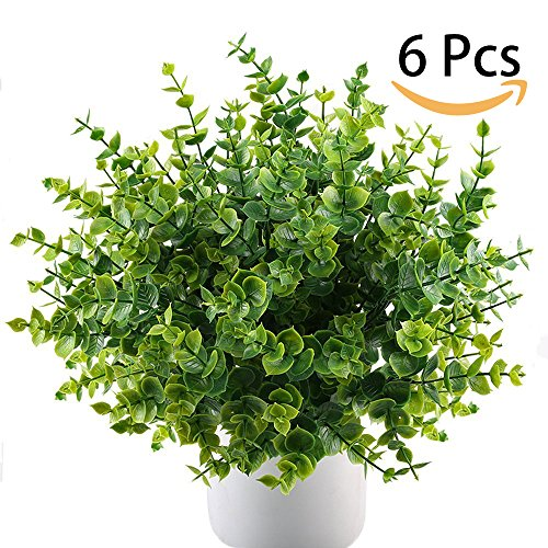 indoor bush plants - 6