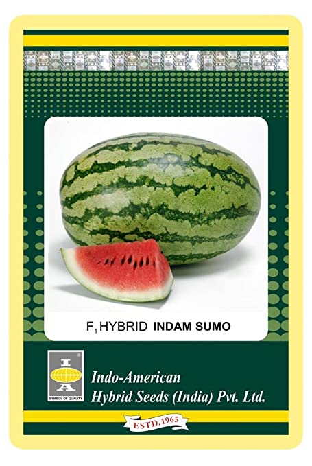 Indo-American Hybrid IAHS58 Watermelon Indam Sumo Seed (Pack of 3)