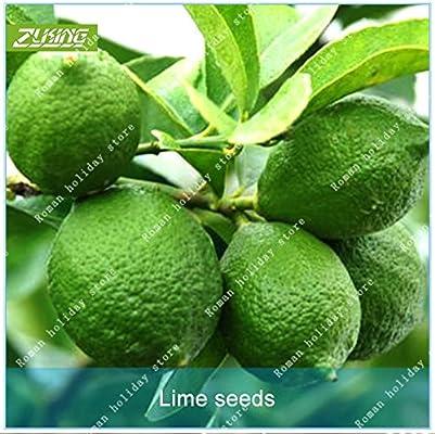ZLKING 20 cal de semillas Semillas de frutas de naranja plantas bonsai para jardín frutales de vivero Bonsai Semillas Frutas Tropicales: Amazon.es: Jardín