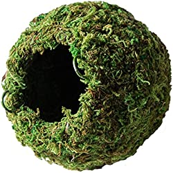 "Galápagos (05346) Mossy Cave Hide, 4"", Green"