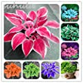 120 Pcs Mixed Hosta Seeds Perennial Plantain Lily Flower Grass Ornamental Plant Ground Cover Plant Ground Cover Plant Colorful