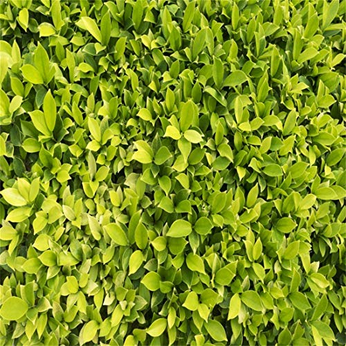 Yeele 10x10ft Vinyl Photography Background Spring Scene Green Leaf Carpet Tile Mode Grassland Privet Bush Photo Backdrop Studio Props Wallpaper