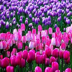 semillas de gran venta Venta caliente 50pcs Tulip (color de la mezcla al azar) de semillas de flores bonsai jardín de DIY el envío libre