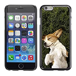 Vortex Accessory Carcasa Protectora Para APPLE iPHONE 6 PLUS ( 5.5 IN ) - Jack Russell Terrier Dog Canine Pet -