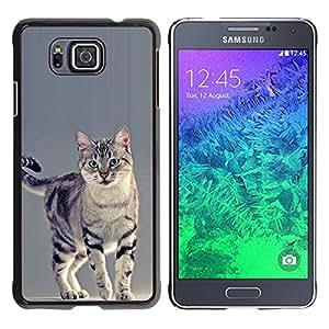 Vortex Accessory Hard Protective Case Skin Cover For Samsung Galaxy Alpha G850 - Sokoke Serengeti American Shorthair