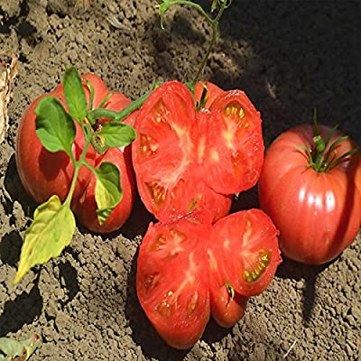 Tomato Garden Seeds - Mortgage Lifter - Non-GMO, Heirloom, Vegetable Gardening Seed