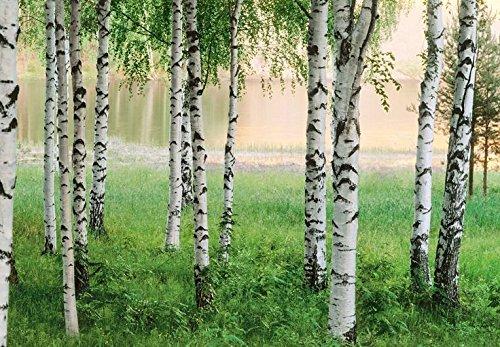500 seeds BEAUTIFUL BIRCH TREE SEEDS GREEN LEAVES, WHITE BARK