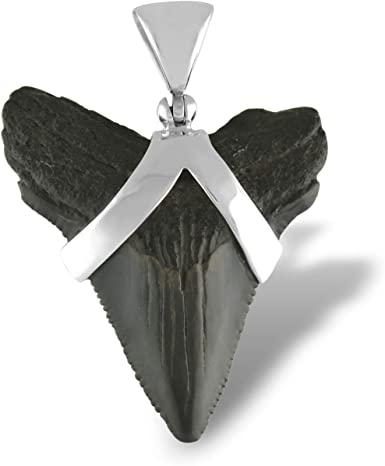 Real Fossil Megladon Mako Shark Tooth Pendant with  Silver top