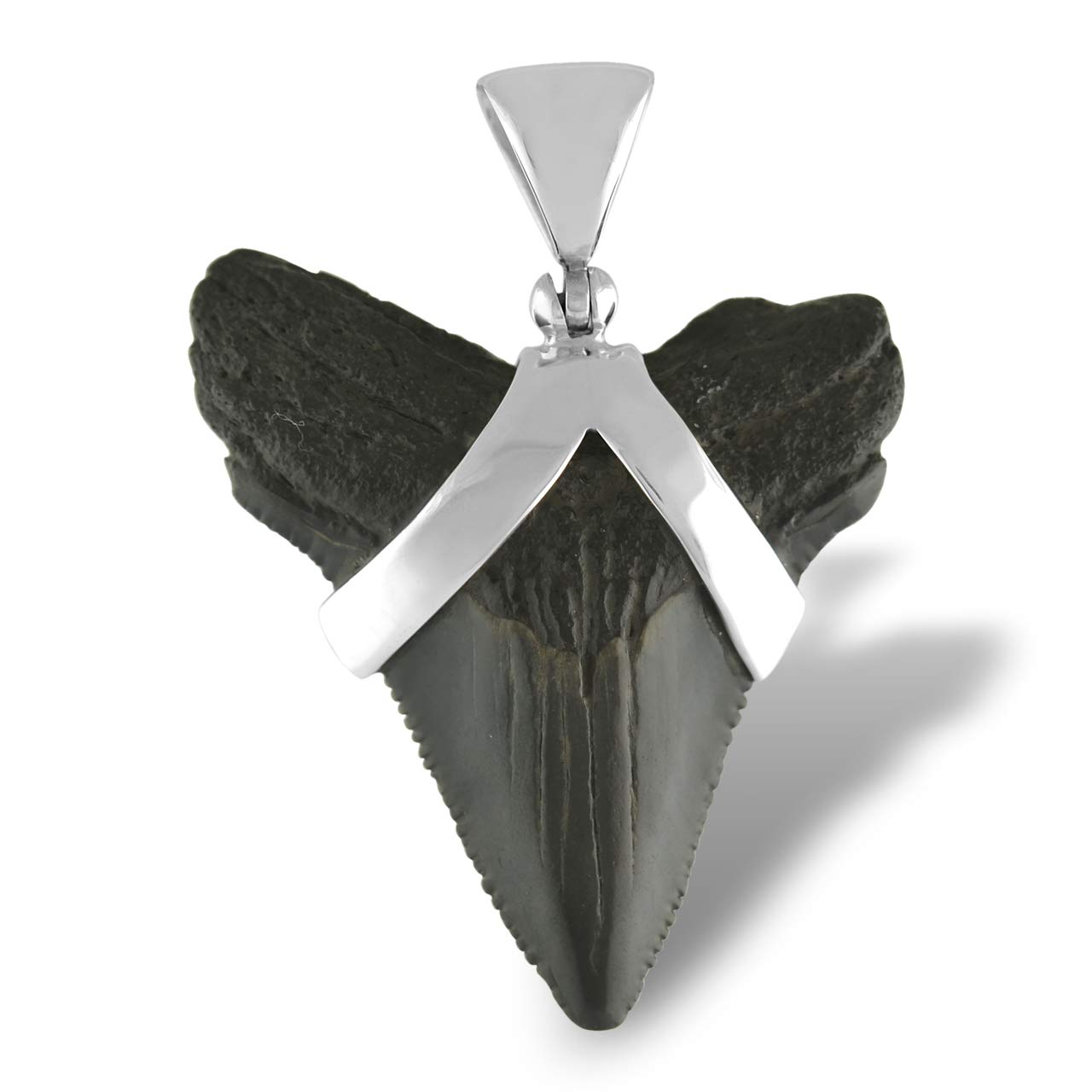 Fossil Shark Tooth Sterling Silver Pendant