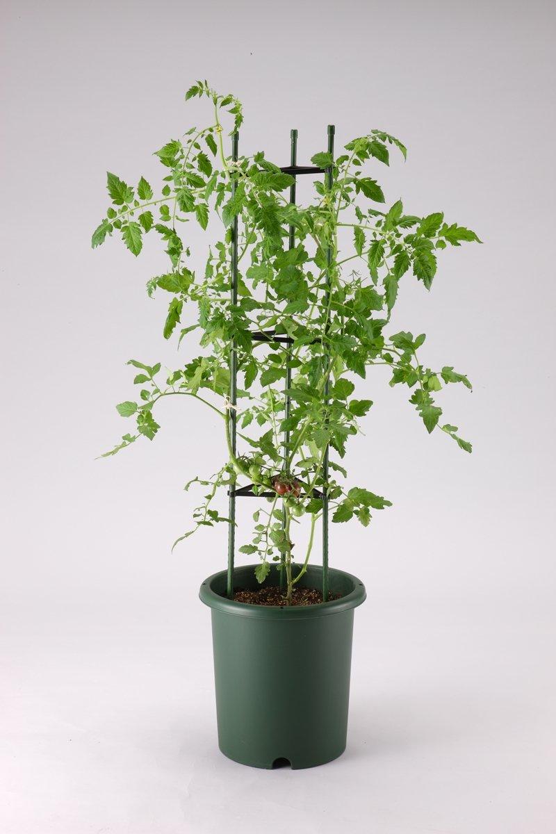 アップルウェアー 野菜鉢深型 330 グリーン|ガーデン 園芸用品 鉢用品 プラ鉢