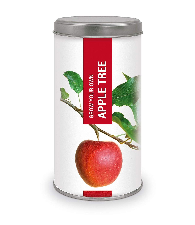 Garden Pocket Bonsai - Kit Grow You Own Apple Tree