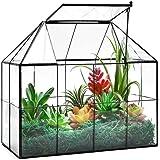 """Large Glass Terrarium House Planter – Succulent Plant Terrarium House Shape Glass Greenhouse Terrarium with lid 9.8""""X7.9""""X5.9"""