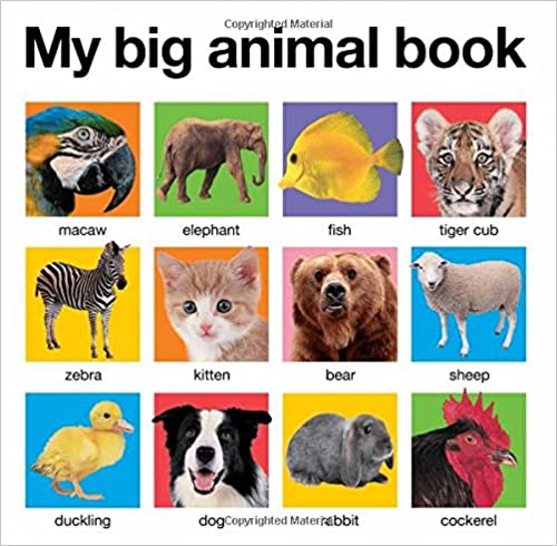 front-cover-of-my-big-animals-book