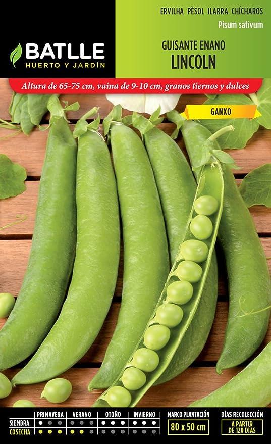 Semillas Leguminosas - Guisante enano Lincoln 5kg - Batlle: Amazon ...