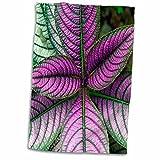 "3D Rose Persian Shield Plant-Strobilanthes Dyerianus-Costa Rica Hand Towel 15"" x 22"" Multicolor"