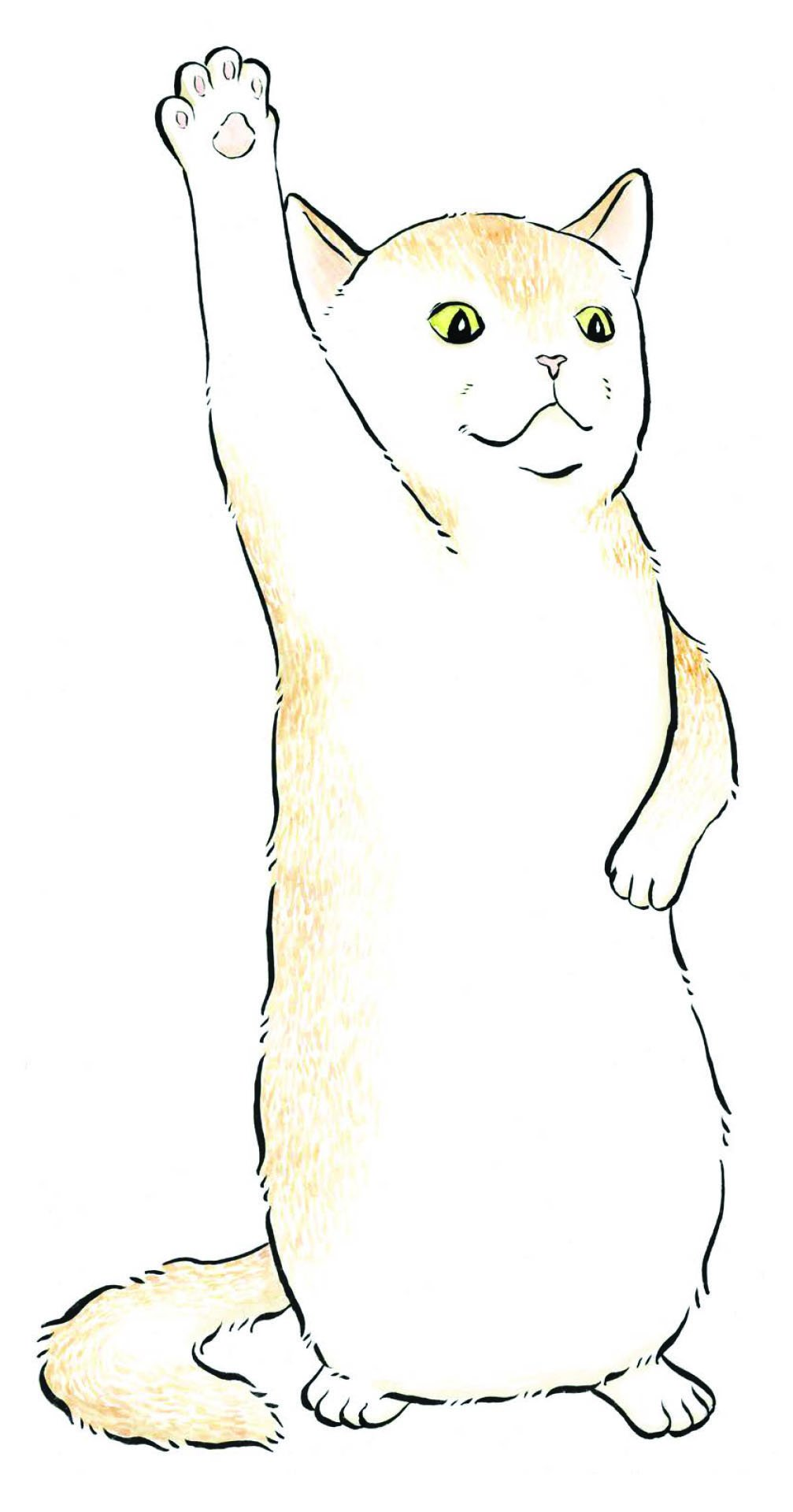Amazon.com: Invisible Cat Activities: A Complete-the-Drawing Book ...