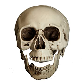 halloween skeleton skulls 75 inch realistic human plastic skull head halloween prop - Halloween Skeleton Head