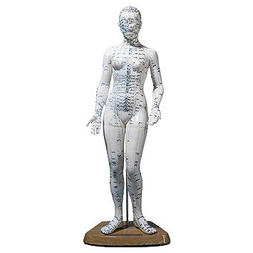 Akupunkturfigur weiblich 45 cm, Anatomie Modell, Anatomische ...