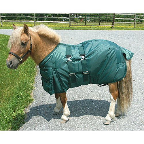 Intrepid International Miniature Horse Turnout Blanket, 45-Inch, Hunter (Miniature Horse Pony)