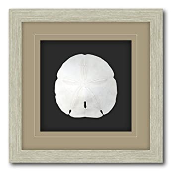 shadow box frame double matte mounted sand dollar with driftwood molding