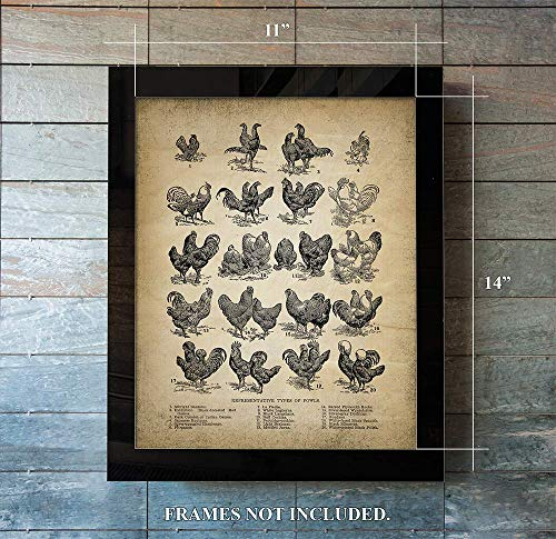 Vintage Farm Animal Print - Types of Fowl - Unique Wall Art of a Classic Image - Perfect Gift for Everyone who Keeps -