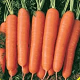 buy Everwilde Farms - 2000 Scarlet Nantes Carrot Seeds - Gold Vault Jumbo Seed Packet now, new 2018-2017 bestseller, review and Photo, best price $2.50