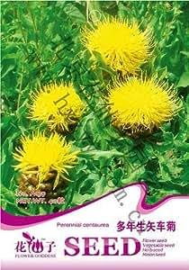 Semillas de flores de aciano semilla perenne envase original de 40 granos / bolsa