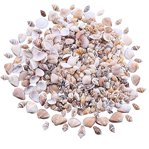 MINI TINY Natural Mixed Ocean Sea Shells Variety Beach Decor Crafts Aquarium Scrapbook Candle Miniature Decoration (Style B) (Mini Beach Natural Shells)