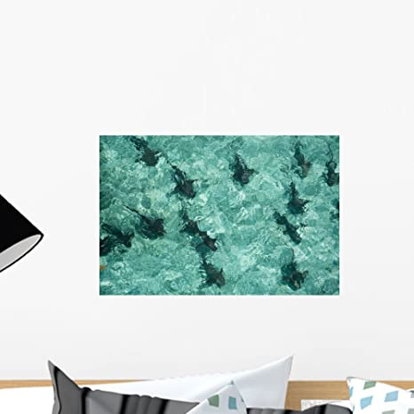 Amazon.com: Enfermera de tiburones Patrol Shallow Mural por ...