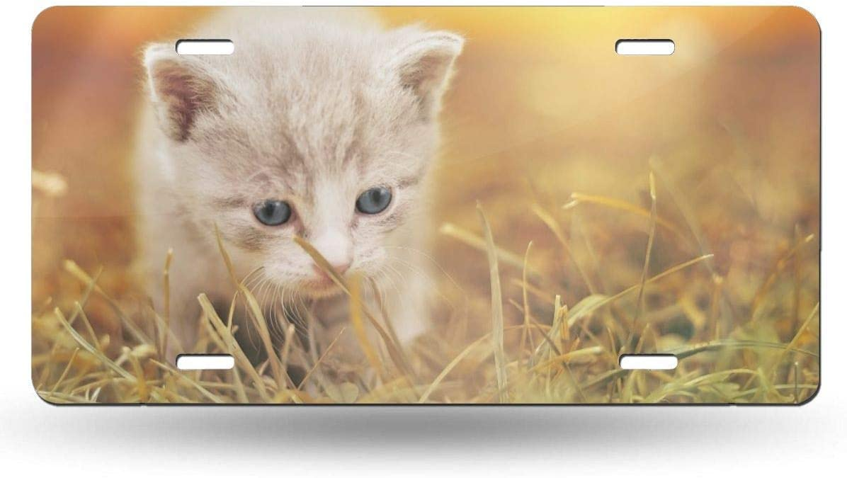 Anwei Black Cat Eyes Novelty Car 6x12 Aluminum Front Vehicle License Plate Frame Vanity Tag Sign