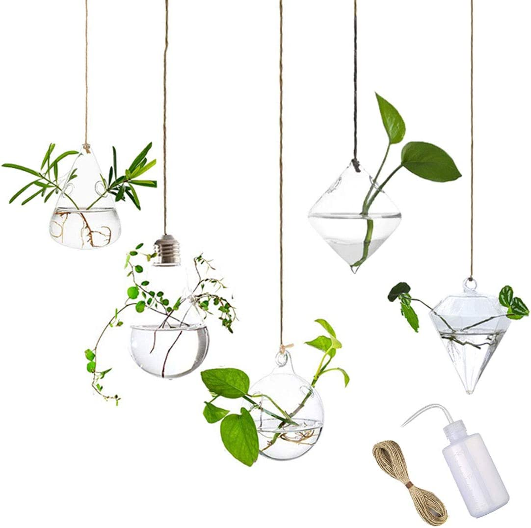 MIRACLE BLACK 5 Pcs Glass Hanging Water Planters Terrariums, hydroponic vase, Plant Flower Glass Containers, Home Garden Decor with Watering Squeeze Bottle