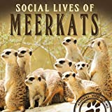 Social Lives of Meerkats (Animal Behaviors)
