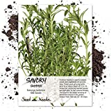 Seed Needs, Summer Savory Herb (Satureja hortensis) 500 Seeds Non-GMO