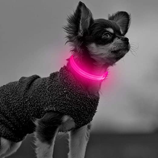 Clan-X Light Up Dog Collars - USB Rechargeable LED Dog Collar for Small Dogs and Cats, Waterproof Reflective Pet Necklace for Night Walking (XS, Pink)
